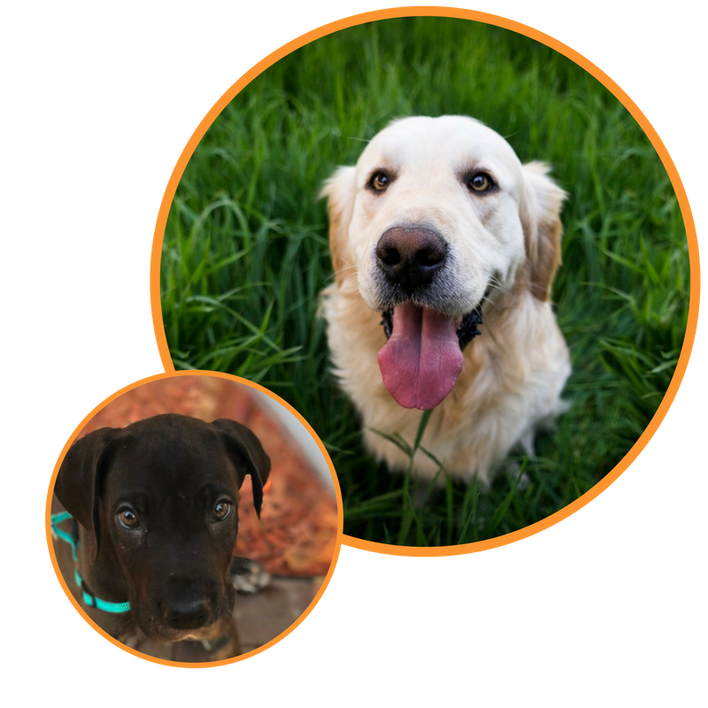 Dog Training In Your Home Columbia Any Age Any Breed Veterinarian Recommended